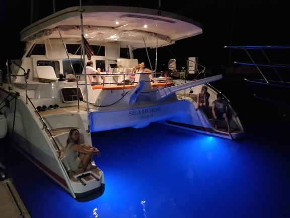 Seahorse catamaran at night