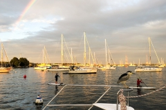 Sunset, rainbow and an unexpected visitor