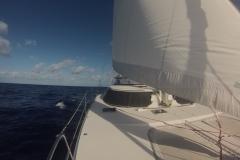 Screecher Sailing
